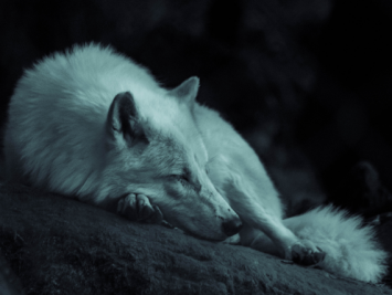 Caring Leadership: 7 types of rest